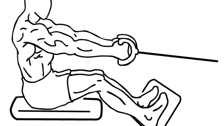 exercice rameur muscles