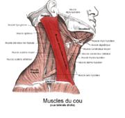 Rameur Pour Quels Muscles