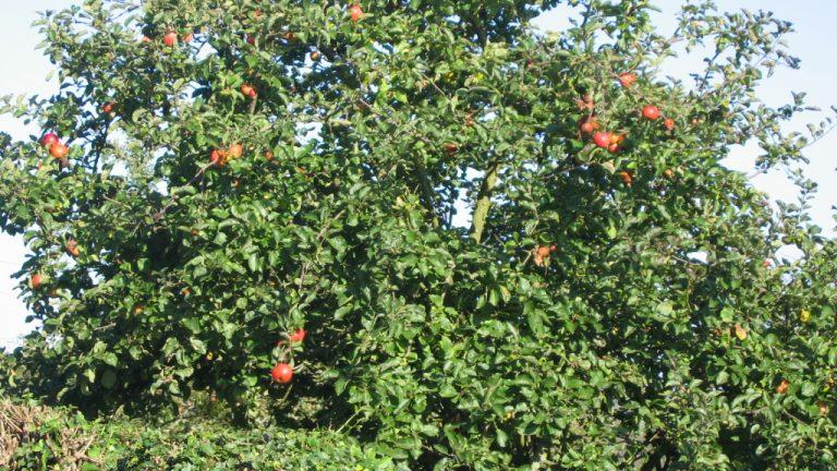 apple plan